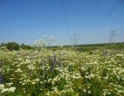 В Смоленской области владелец более 200 гектаров зарастающих бурьяном земель сельскохозяйственного назначения привлечен к ответственности