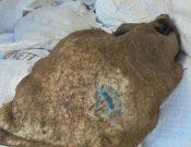 Шкуры крупного рогатого скота возвращены белорусскому отправителю