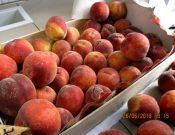 Зараженные личинками восточной плодожорки персики возвращены македонскому отправителю