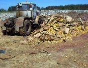 Об утилизации в Смоленской области более 38 тонн подкарантинной продукции неизвестного происхождения