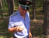 В Рославльском районе Смоленской области сохраняется карантин по малому черному еловому усачу