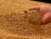 О предстоящем совещании с производителями, хранителями, переработчиками иэкспортёрами зерна Смоленской области