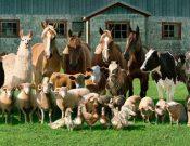 Улучшенная программа по профилактике заболеваний сельскохозяйственных животных