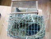 В Брянской области в ходе ветеринарного контроля в пассажирских поездах запрещен ввоз 4 декоративных птиц, более 700 кг мяса, сала и колбасы