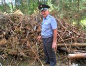 В Брянской области обследовано более 200 тысяч гектаров лесных насаждений