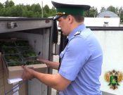 Итоги карантинного фитосанитарного контроля в Брянской и Смоленской областях