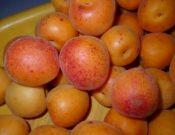 В Смоленской области запрещен ввоз 19 тонн абрикосов, зараженных карантинным вредителем