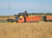 В сельхозпредприятиях Брянской области стартовала уборка зерновых, рапса и ранних сортов картофеля