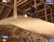 Видео: В Брянской области началась проверка качества зерна. Сюжет ГТРК «Брянск»