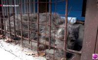 Видео. Вакцинация животных. ТК «Городской»