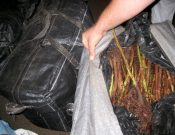 На территорию Украины возвращено 1400 штук саженцев малины