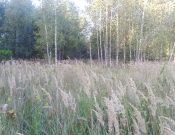 Зарастающие земли сельскохозяйственного назначения выявлены в Выгоничском районе в ходе административного обследования