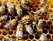 Вниманию хозяйствующих субъектов, занятых с сфере пчеловодства