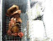 В Брянске сняли с реализации 60 кг мясной продукции неизвестного происхождения