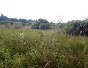 В Смоленской области выявлено 465 гектаров зарастающих земель сельскохозяйственного назначения