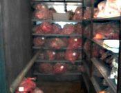 О результатах проверки свиноводческого предприятия в Смоленской области