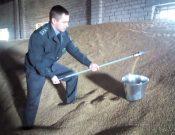 О промежуточных результатах контроля качества семян зерновых культур, предназначенных для озимого сева