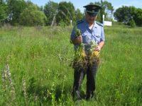 В Гордеевском районе на 70 гектарах земель сельскохозяйственного назначения снят карантин по повилике