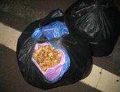 Саженцы роз и орехи не прошли контроль в Брянской области