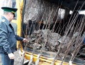 В Брянской области в апреле пресечены нарушения при реализации 1900 пакетиков семян и 2500 саженцев