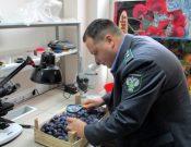 В Молдавию вернули более 19 тонн слив, зараженных карантинным вредителем