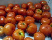В Македонию возвращены томаты, зараженные молью