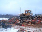 В Смоленской области уничтожено более 39 тонн яблок и груш