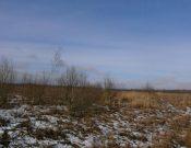 Зарастающие земли сельскохозяйственного назначения выявлены в Выгоничском районе