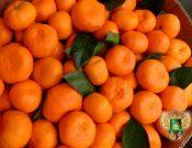Видео: Контроль мандаринов, поступающих через пункты пропуска Брянской и Смоленской областей области