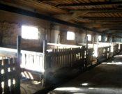 На основании результатов проверки, проведенной Управлением Россельхознадзора, суд приостановил деятельность свиноводческого предприятия