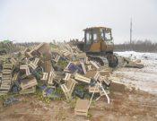 В Смоленской области уничтожено более 100 тонн яблок и груш неизвестного происхождения