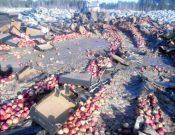 В Брянской области утилизировано более 19 тонн яблок неизвестного происхождения