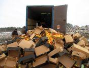 Более 40 тонн яблок неизвестного происхождения, качества и безопасности, ввезенных из Республики Беларусь, утилизированы в Смоленской области