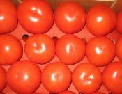 В Брянской области Управлением Россельхознадзора недопущен ввоз очередной партии турецких томатов, зараженных карантинным вредителем