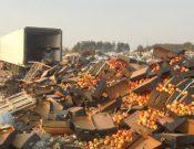 В Брянской области уничтожена нелегально ввезенная растениеводческая продукция неизвестного происхождения