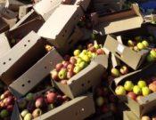 Яблоки неизвестного происхождения утилизированы в Брянской области