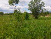 В Почепском районе выявлены зарастающие земли сельскохозяйственного назначения