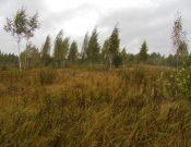 Смоленский областной суд подтвердил законность предписаний, выданных Управлением Россельхознадзора недобросовестному землепользователю
