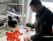 Управление Россельхознадзора продолжает выявлять в турецкой плодоовощной продукции карантинные вредные организмы