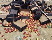 В Смоленской области утилизированы яблоки неизвестного происхождения