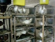 По результатам проверки, проведенной Управлением Россельхознадзора, суд временно приостановил деятельность дятьковского птицеводческого хозяйства