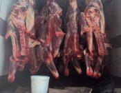 В Брянской области пресечен незаконный ввоз с территории Республики Беларусь мяса неизвестного происхождения