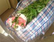 В Брянской области продолжаются незаконные попытки ввоза с территории Украины срезов цветов