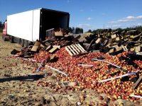 В Смоленской области утилизированы яблоки неустановленного происхождения