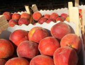 В импортной растительной продукции были обнаружены карантинные объекты