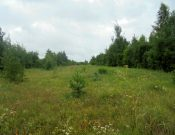 Владельцу зарастающих земель сельскохозяйственного назначения, расположенных в Комаричском районе, придется заплатить 200 тысяч рублей штрафа