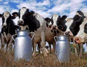 Управлением Россельхознадзора с помощью ФГИС «Меркурий» выявлены «рекордные» надои молока в Брянской области