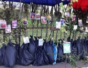 В Брянской области Управление Россельхознадзора продолжает контроль за реализацией саженцев плодовых культур