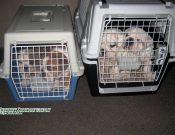 На сайте Россельхознадзора появилась возможность в онлайн-форме ознакомиться с информацией о ввозе, вывозе и перевозке по территории России домашних животных