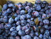 В Брянской области запрещен ввоз более 19 тонн слив из Молдовы